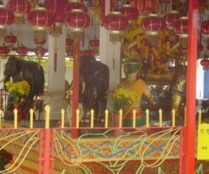 zuzka_musilova_na_cestach_wat_-chaiya_-mangkalaram_-temple_-penang-_1623