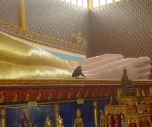 zuzka_musilova_na_cestach_wat_-chaiya_-mangkalaram_-temple_-penang-_1639